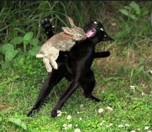 When Bunny's go Bad.