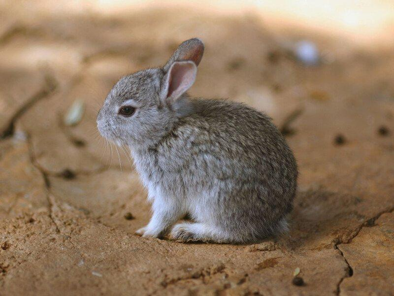 What are male rabbits called?