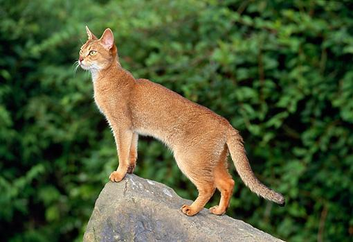 Whenever the leader calls a meeting at the Highrock, what do you do?