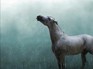 If it was storming and your horses were out in the pasture, you would . . .