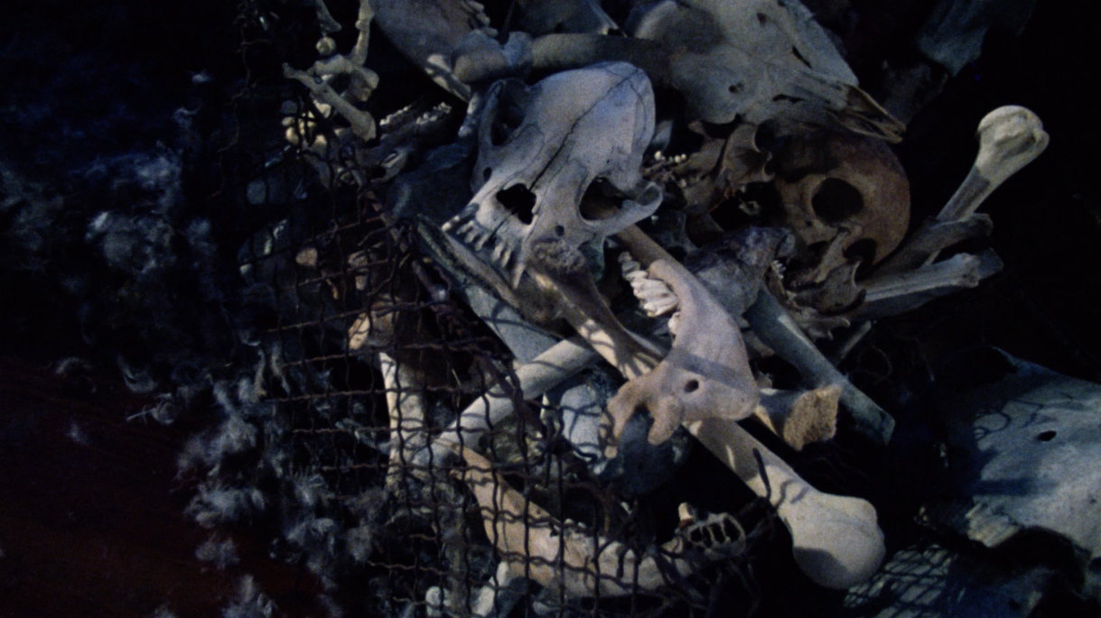 You find yourself trapped in a room with a bunch of skeletons and skulls. What do you do?