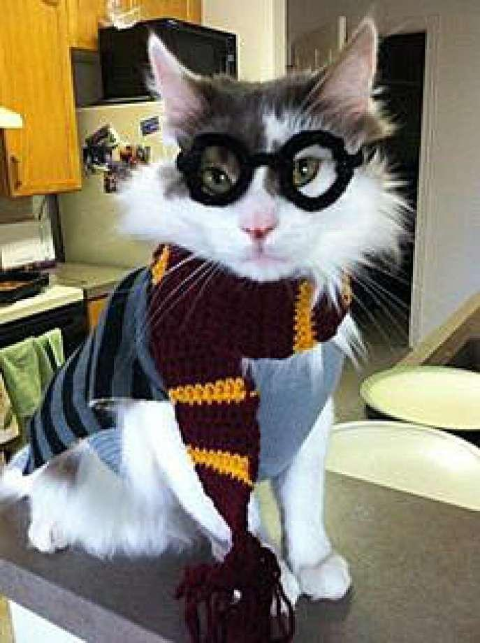 There is a puff of smoke and all of a sudden, Hagrid is in your house to whisk you and your cat away to Hogwarts! How does your cat react?