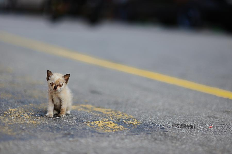 Have you ever saved a stray dog/kitten?