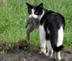 Let's role-play: You see a small Apprentice - from another Clan - hunting in your territory. The Apprentice is hunting a good-sized rabbit. You know that their Clan is hard on any Apprentices who don't bring back any food from a hunting mission, and the cat looks half-starved, but your Clan needs some food too. What do you do?