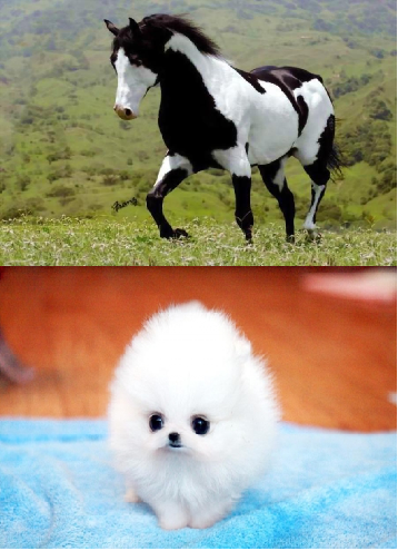 Would you rather own a horse or a dog