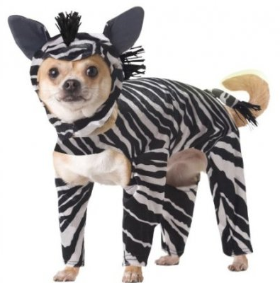 Would you have a pet or a zebra