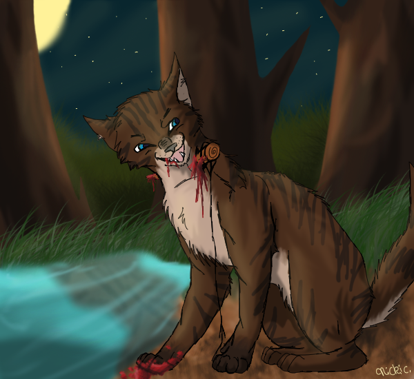What did Hawkfrost say in Sunset, page 298?