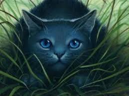 Was Bluestar ever wrapped up in a prophecy? If so, who did she get it from and did she fulfill it?