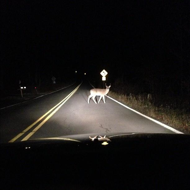 You're driving home at night and you stun a deer in your headlights. How do you handle this?