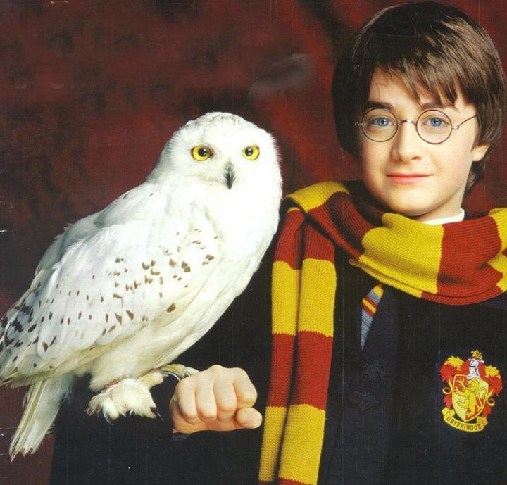 What is the name of Harry's owl?