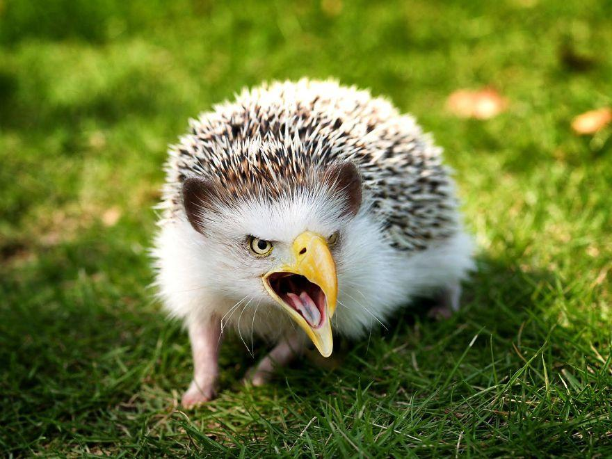 Is this picture below real? I call it an hedgeeagle by the way