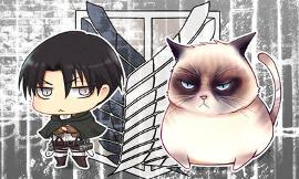Levi and his cats
