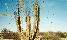 The Exploding Cactus
