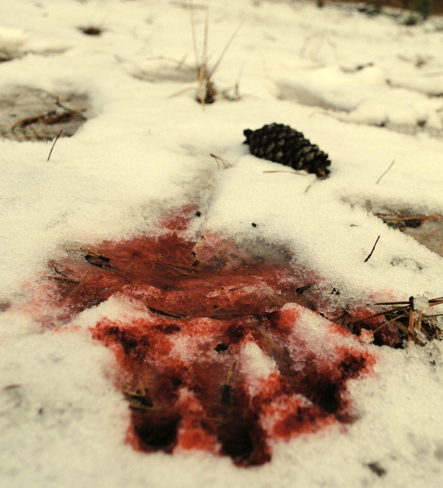 Blood falls upon fresh snow