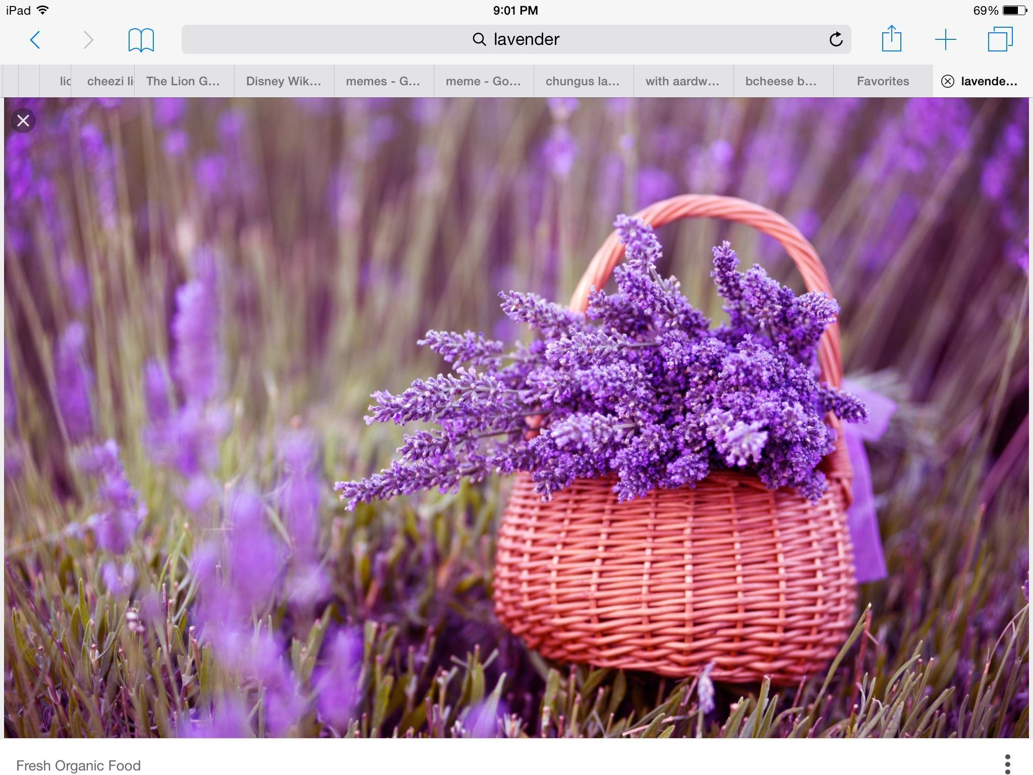 Lavender and Or I
