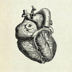 The Sad And Rotting Heart