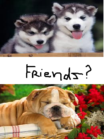 Do English Bulldogs and Siberian Huskies get along?