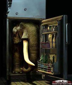 How can you put an elephant in a refrigerator in 3 steps?