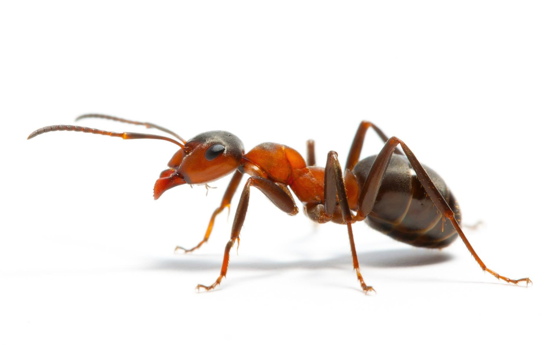 How many ants are there on earth?