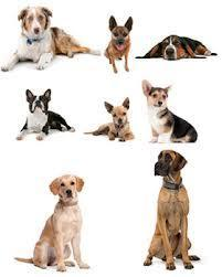 What are your favourite dog breeds?
