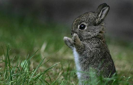 What are good names for a rabbit?