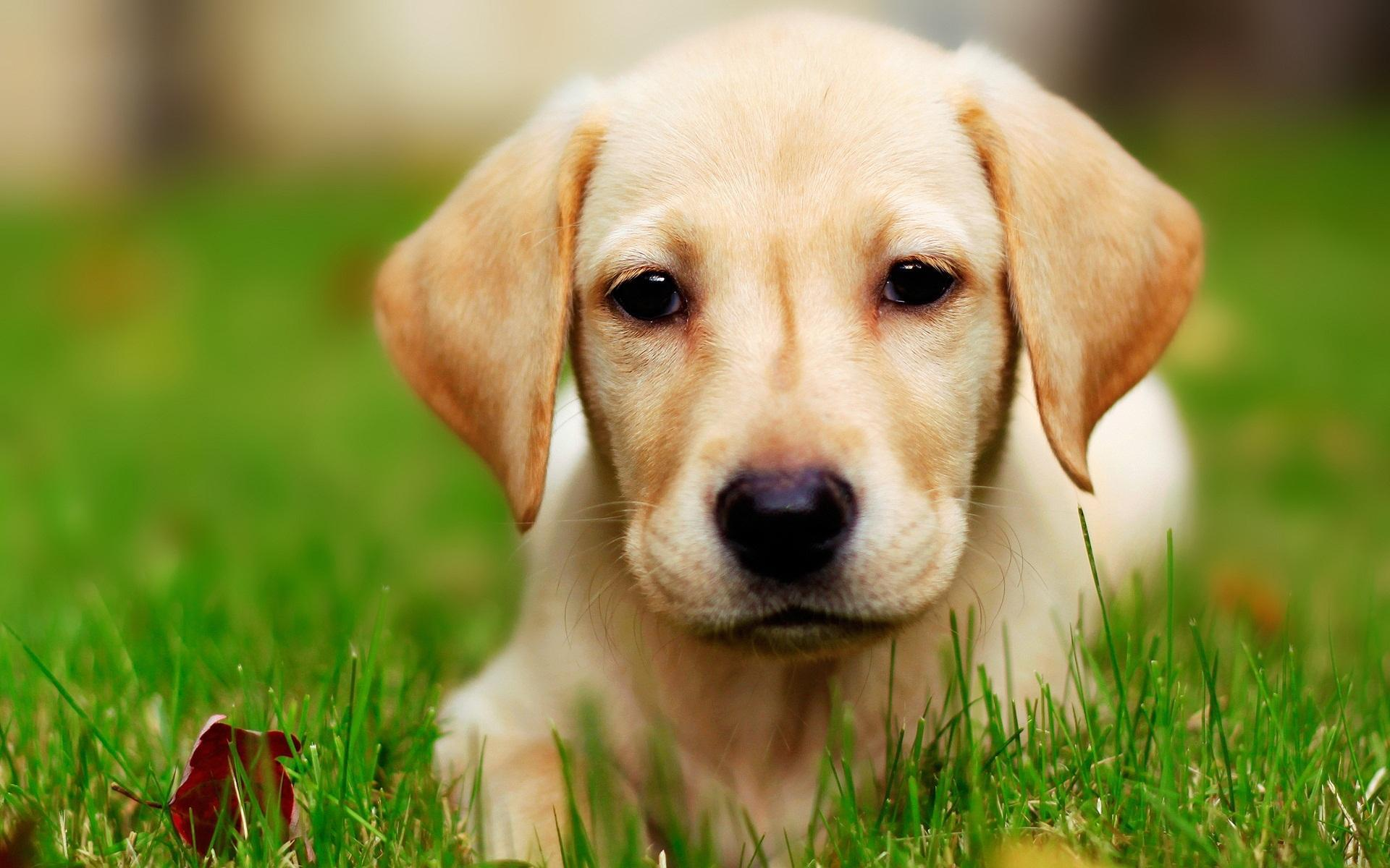 Which breed of dog is the cutest?
