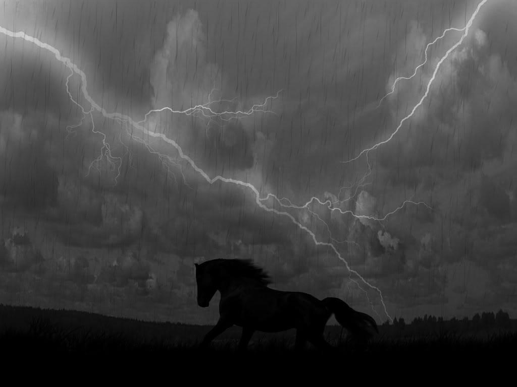 Would you rather ride a horse in a rainstorm every day or ride in perfect weather every week?