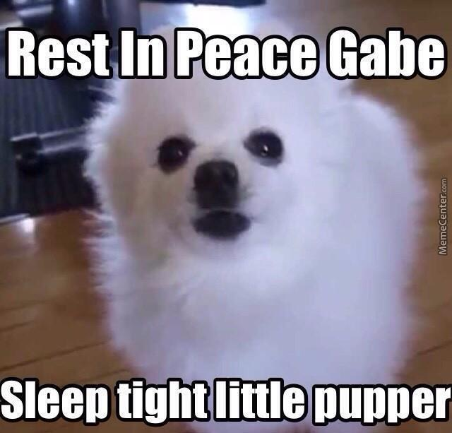 do you tink gabe the doggo is borking up a riot in heaven?