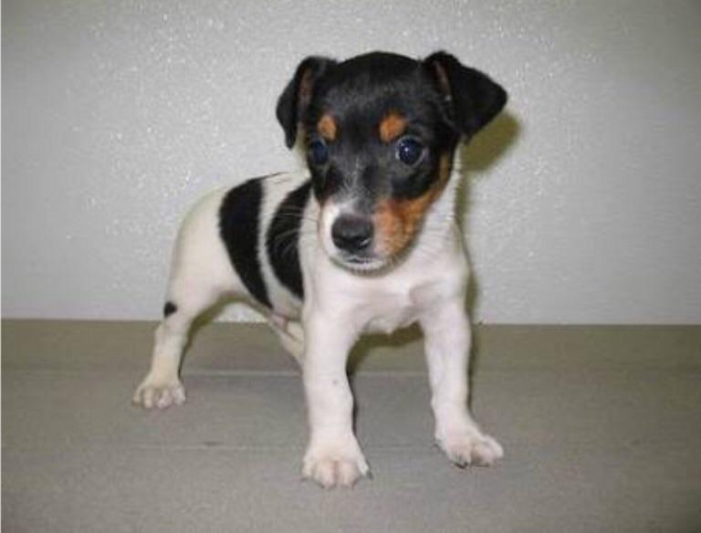 Name for a jack Russell puppy