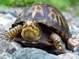 What do you think of this turtle?