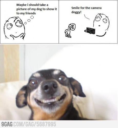 what what would your do if your dog did this?
