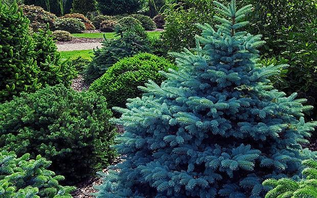 Do tree's or plants ever die from old age?