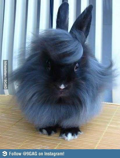 what do you think of this bunny?