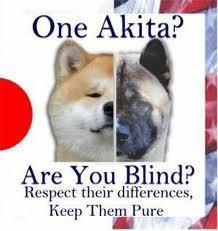 Which is best- The Japanese Akita or the American Akita?