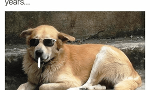 guys do you like the, airbud? i haven't heard that name in years. meme?