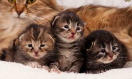 A cat had three kittens named April, May, and June. What was the mothers name?