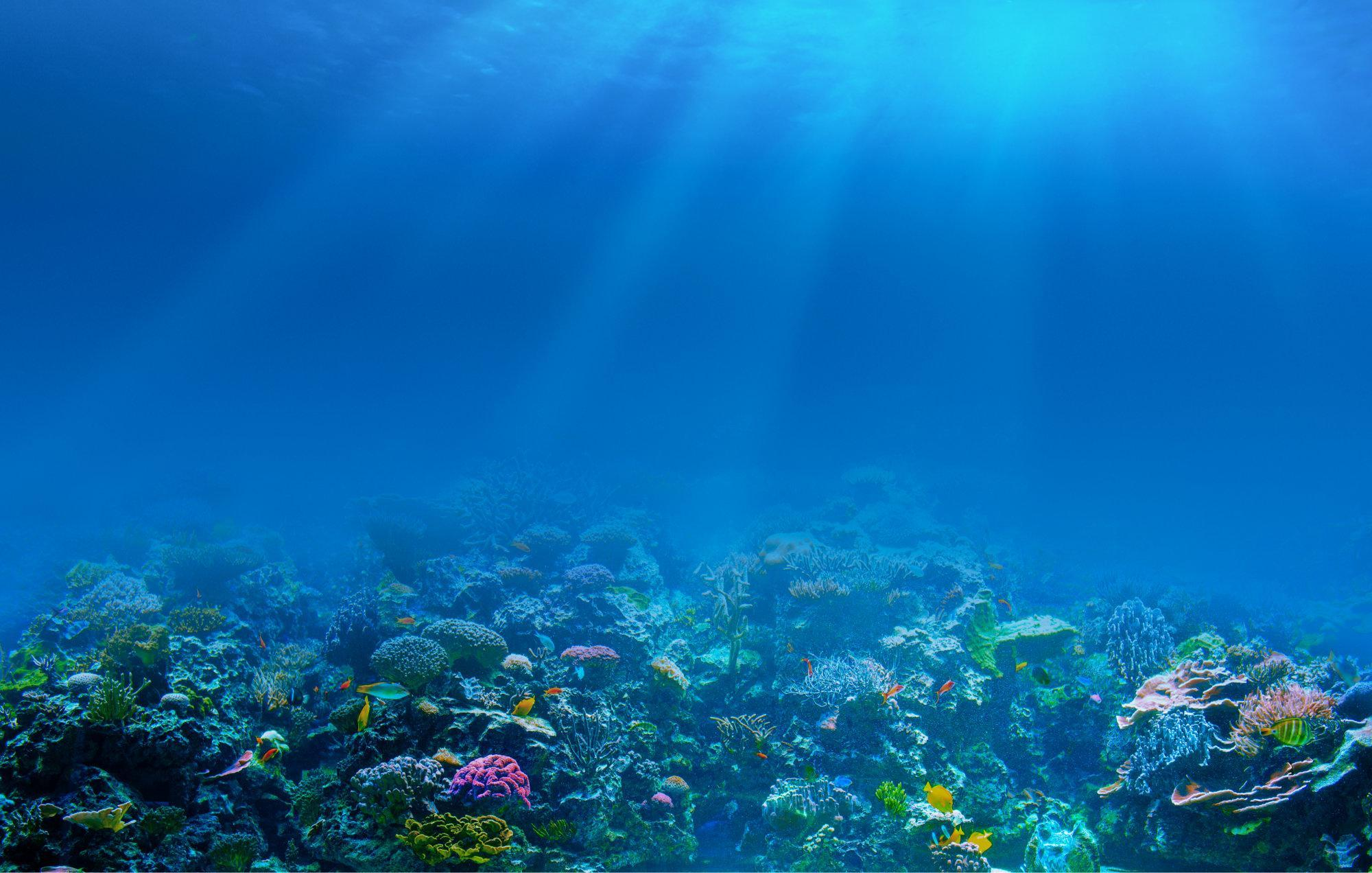 Can humans smell underwater? Why?