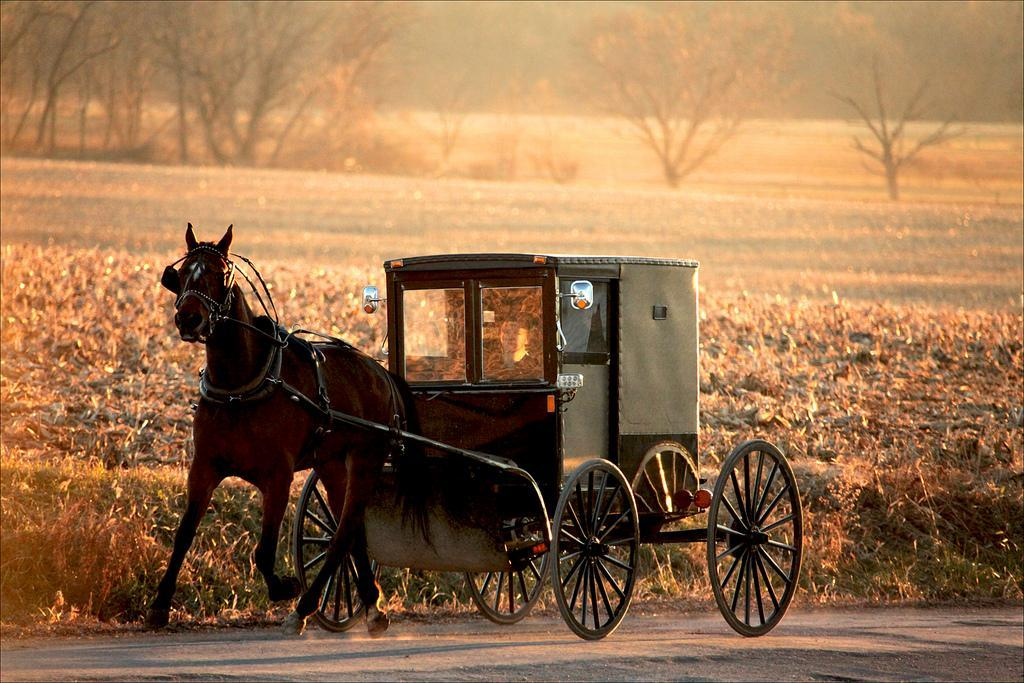 Horse.of.Wagon