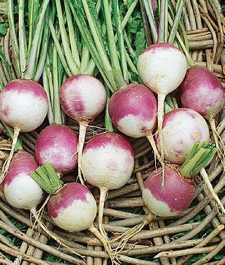 Singing_Turnips
